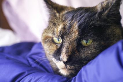 Old Sick Tortie Cat
