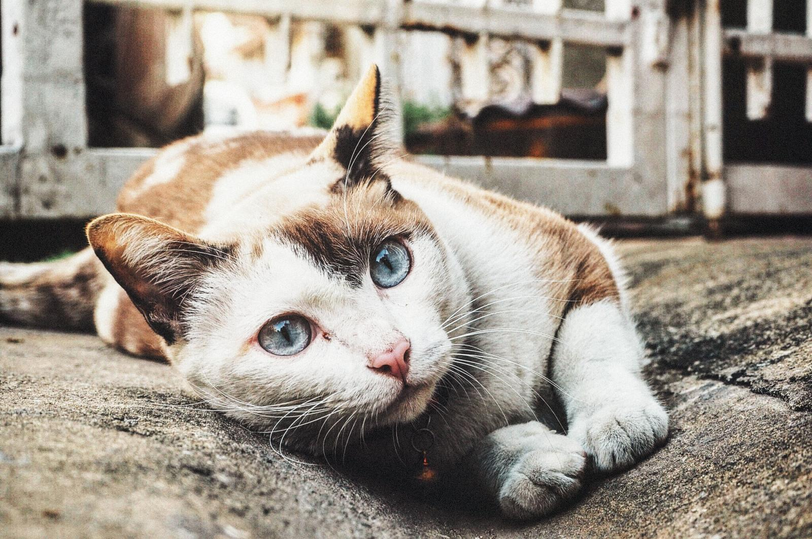 Stray cat lying in the street
