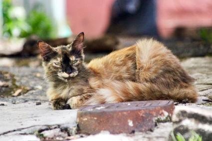 A street cat lying down in an outdoor alley