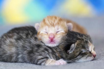 Newborn kittens sleeping on blanket