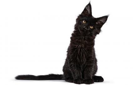 Magical Cat Names for Your Mystical Feline | LoveToKnow