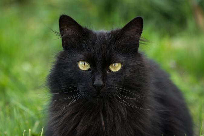 Close-up of black cat outdoors