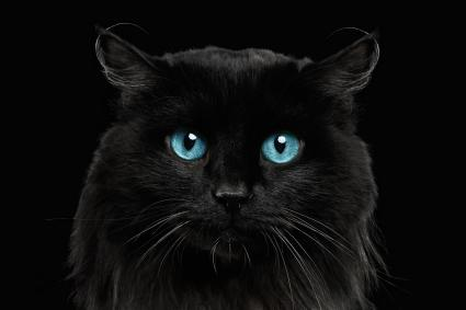 Black cat with blue eyes