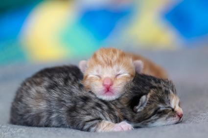 two tiny newborn kittens