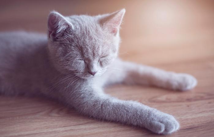 Sick little cat