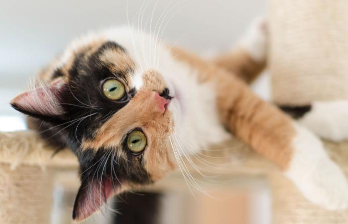calico cat lying on a scratching post