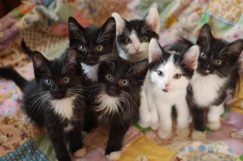 Group of black and white kittens