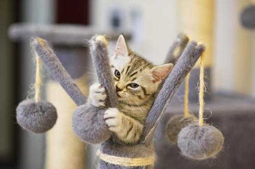Playful kitten on a toy