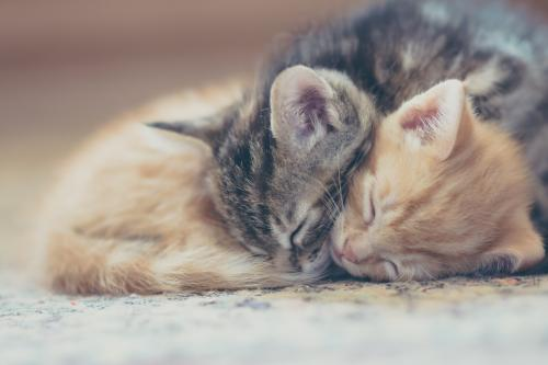 Two kittens sleeping