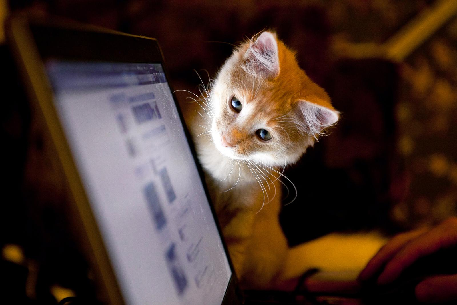 Cat and a computer