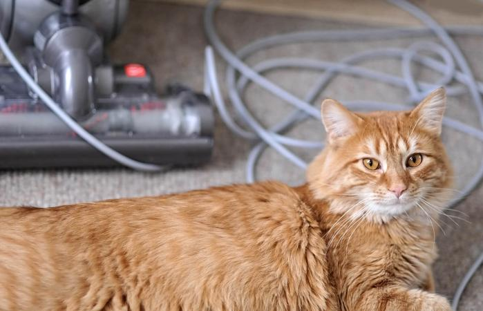 Cat sits in front of a vacuum