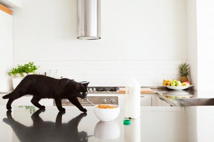 Black cat on counter with milk and cereal