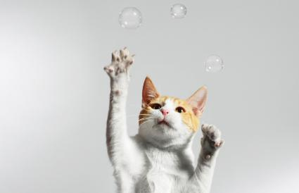 Cat juggling bubbles