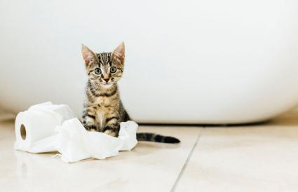 kitten playing with toilet roll
