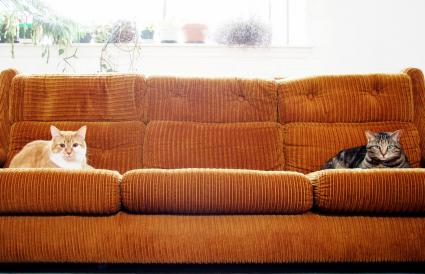 Two cats sitting on an orange couch