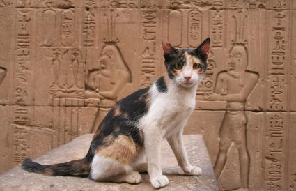 Cat Sitting Against Ancient Egyptian Temple
