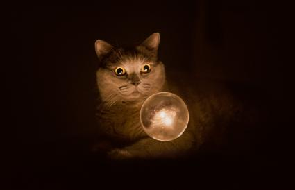 Magic cat with his crystal ball