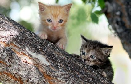 Two Kittens on branch of tree