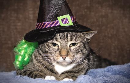 Tabby cat in a witch costume