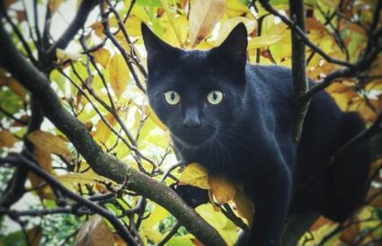Black Cat On Branches