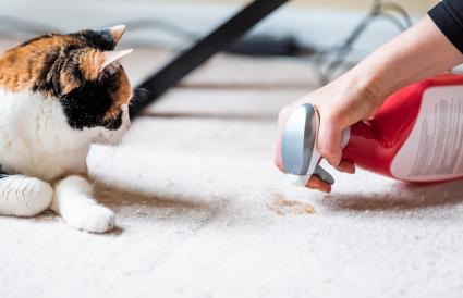 cleaning up a cat stain