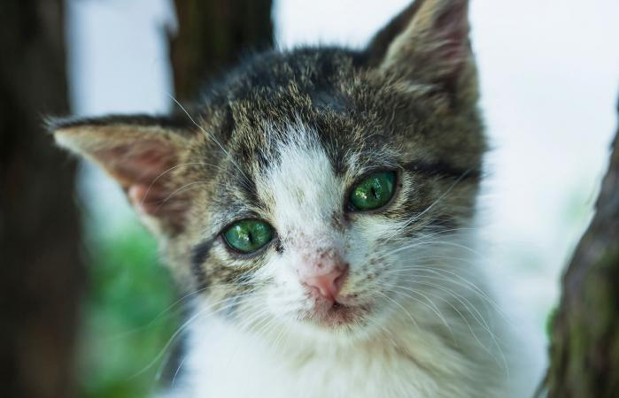 mixed breed kitten in bad condition
