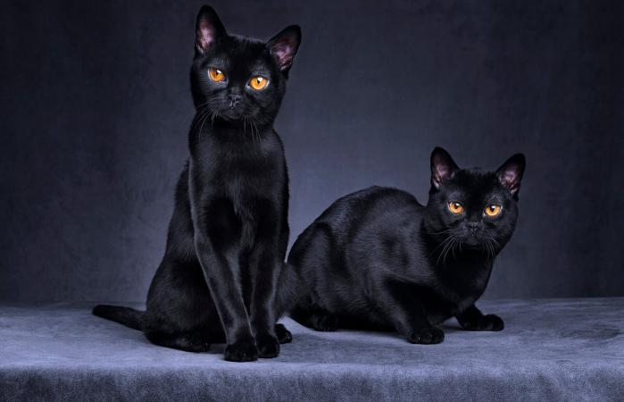 Black cats sitting together