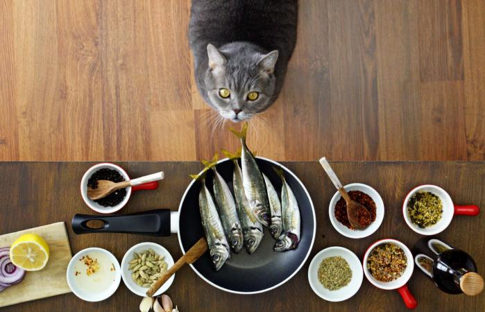 cat looking fishes on the frying pan
