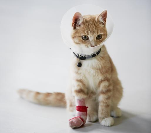 Cat wearing medical cone collar with a bandaged paw