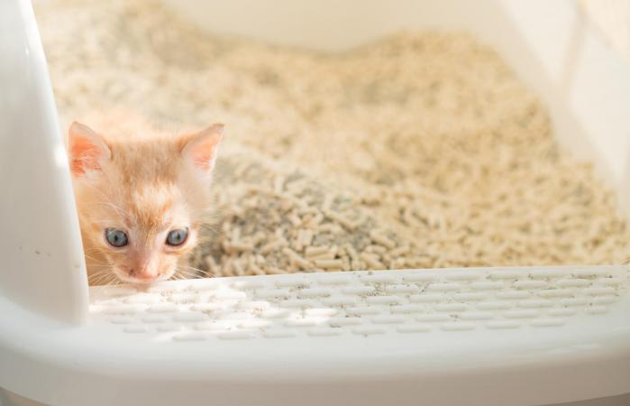cat in plastic litter box