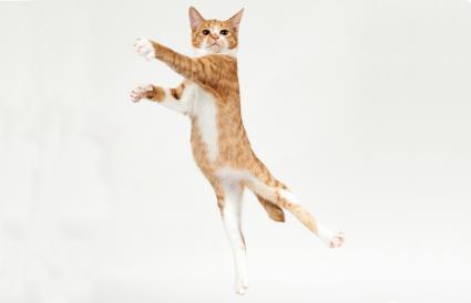 Ginger kitten jumping like dancer