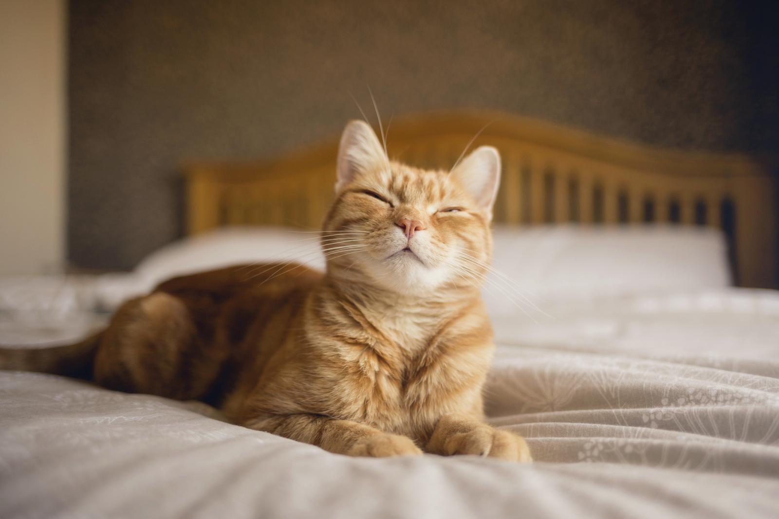 Ginger cat lying on a bed