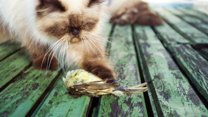 Cat hunts a small bird -