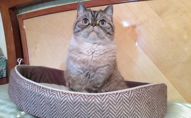 Cat sitting in its cat bed