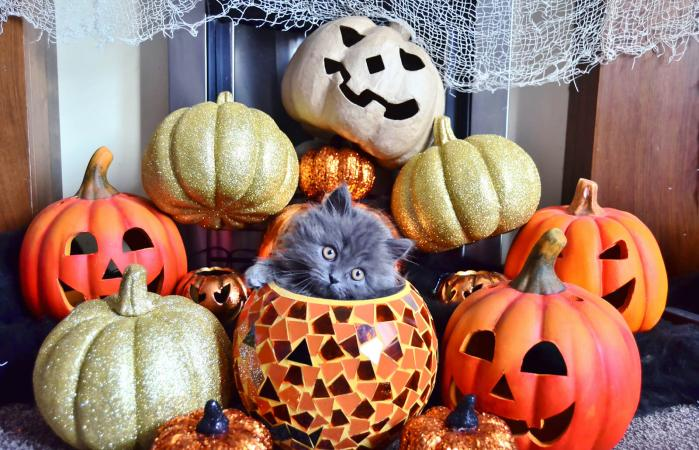 Cat and Halloween decorations