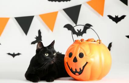Black cat with candies