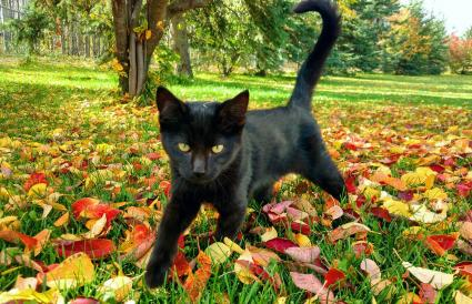 black cat on autumn tree