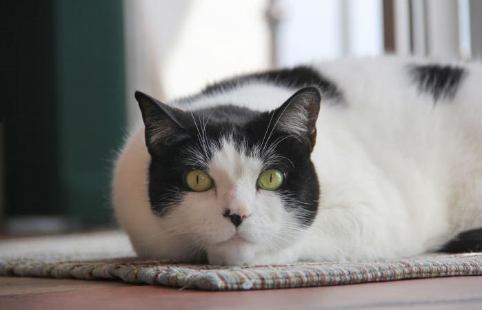 serious cat staring