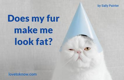 Funny Quotes About Fat Cats