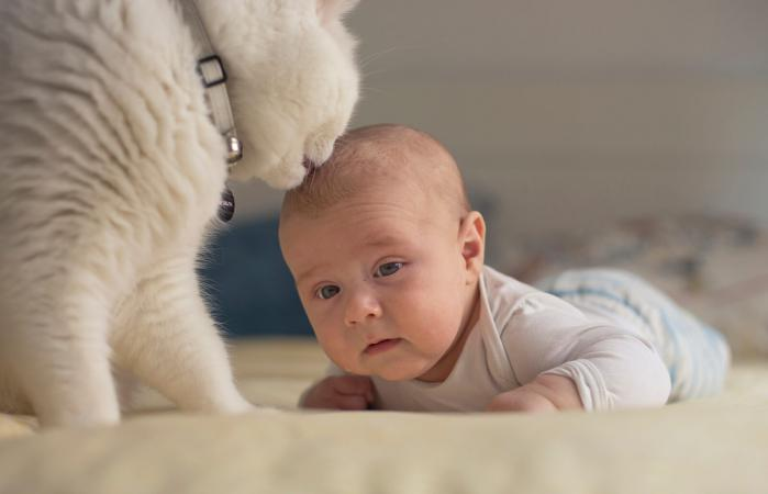 cat licking baby hair
