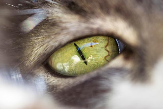 Closeup of the green eye of a cat