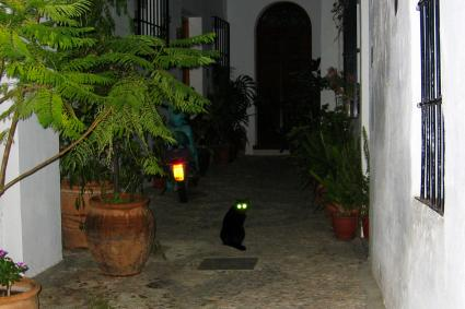 Cat in dark night