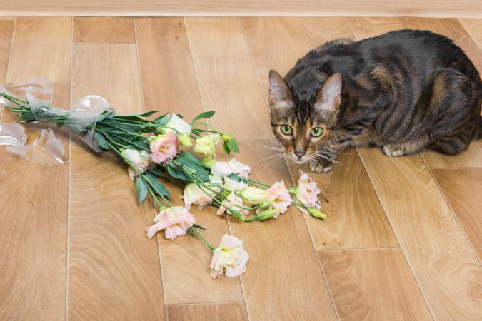 Guilty cat knocked vase off counter onto the floor