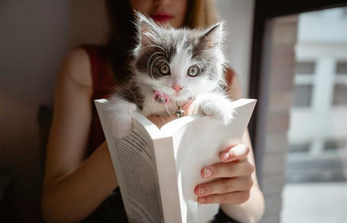woman reading book with cat on top