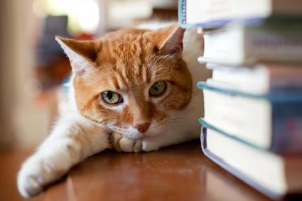 Cat lies down near a stack of books