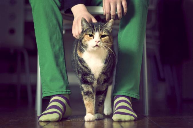 Calico cat walking between the legs of it's owner wearing green jeans and stripy socks