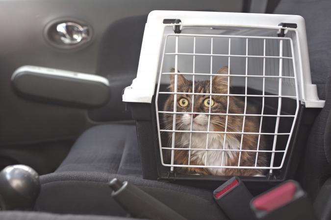 Cat in carrier in car