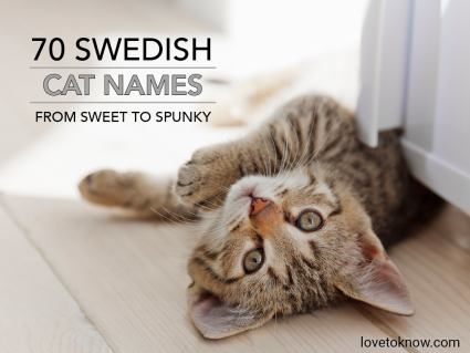 Swedish kitty