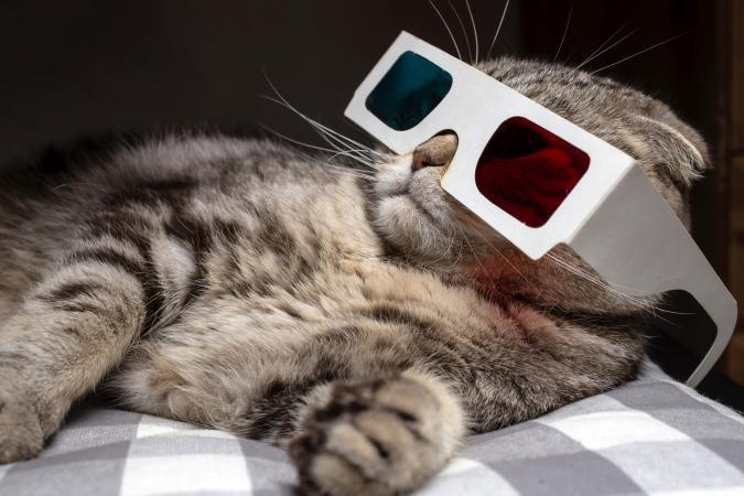 Funny scottish fold cat wore 3D glasses