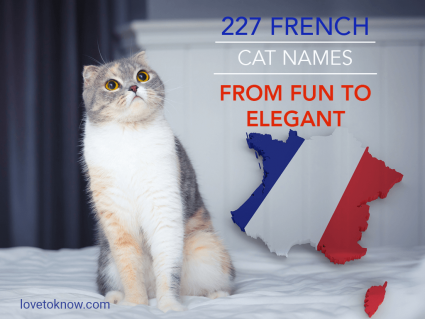 French Cat Names From Fun to Elegant
